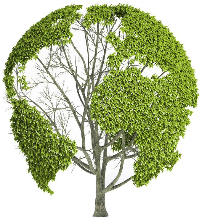 servicii ecorec reciclare